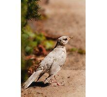 Spirit Bird Photographic Print