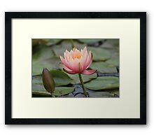Blossom and Bud Framed Print