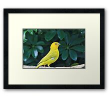 Young Birds Of Paradise
