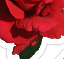 Red roses Sticker