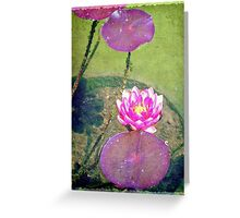 Pretty water lily © Greeting Card