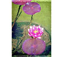 Pretty water lily © Photographic Print