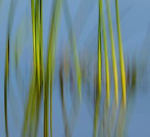 Reeds and Blue Water by Heather Pickard