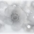 Wintry Anemone by Denise Abé