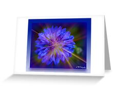 Blue Bachelor's button Greeting Card