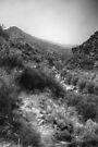Along the Stream - hiking the Rio Grande Rift by njordphoto