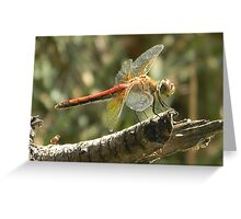 Xander The Dragonfly Greeting Card