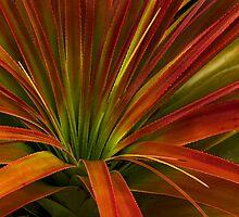 Richea Pandanifolia by Kip Nunn
