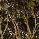 Tea Trees, Angesea Coastline by Joe Mortelliti