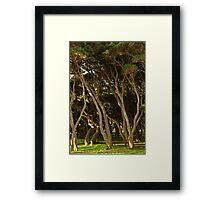 Tea Trees, Angesea Coastline Framed Print