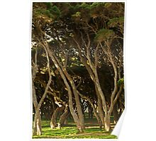 Tea Trees, Angesea Coastline Poster