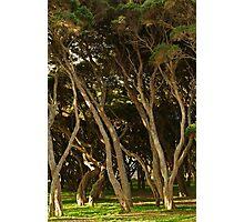 Tea Trees, Angesea Coastline Photographic Print