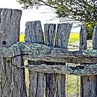 Old Farm Fence by Julie Sleeman