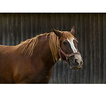 A Horse Photographic Print