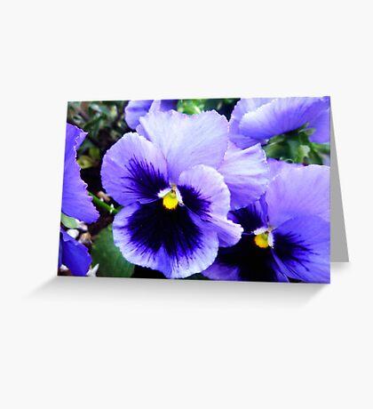 Pansy Profusion Greeting Card