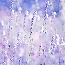 ~ pastel dreams II ~ by Adriana Glackin