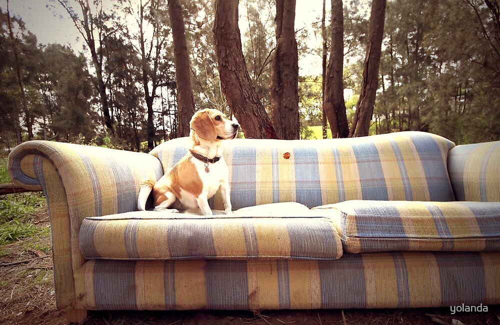 Dog in the Woods by yolanda
