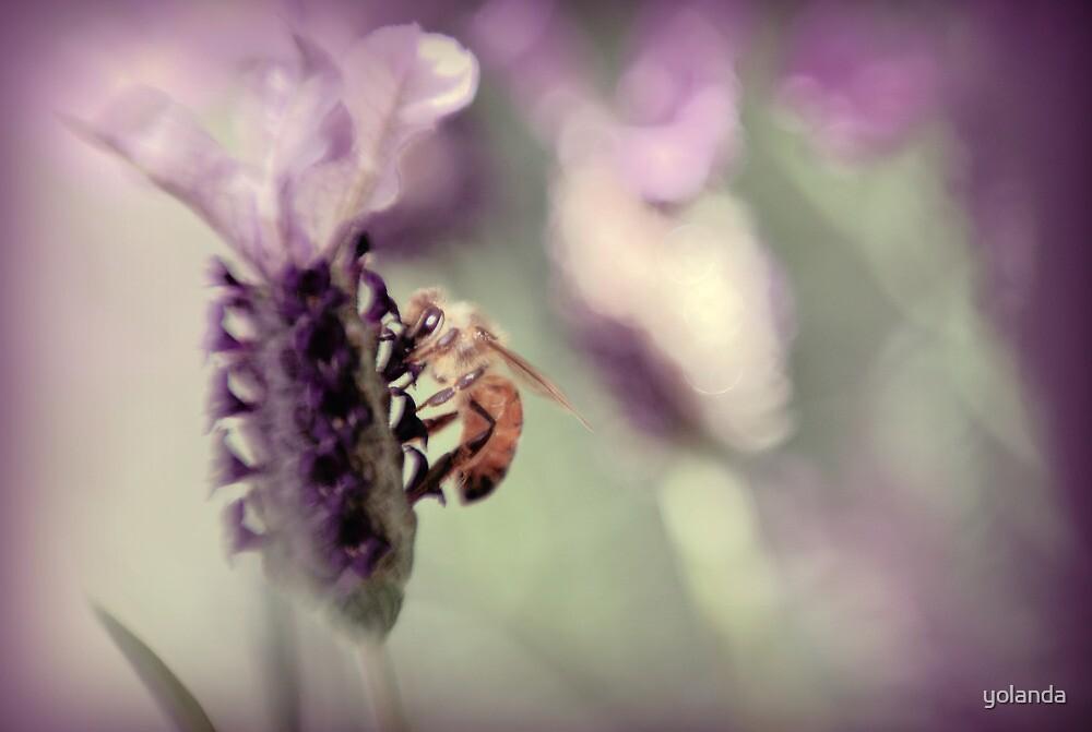 Bee in Lavender II by yolanda