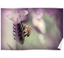 Bee in Lavender II Poster