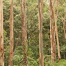 Australian Bush by MaluMoraza