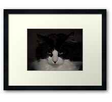 Black & White Rag Doll Cat Framed Print