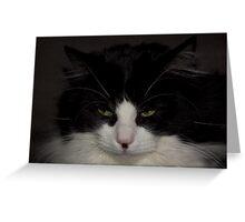 Black & White Rag Doll Cat Greeting Card