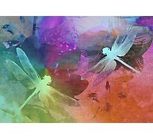 Amazing Dragonflies. Photographic Print