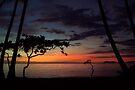 The sun waking the trees by Alfredo Estrella