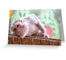 monkeys in the jungle Greeting Card
