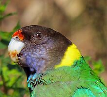 *Twenty-eight Parrot* ~ Yeah, so what I'm a messy eater.  by Toni Kane