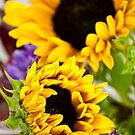 Sunflower by doorfrontphotos