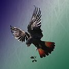 Red-tailed Black Cockatoo by Leonie Mac Lean