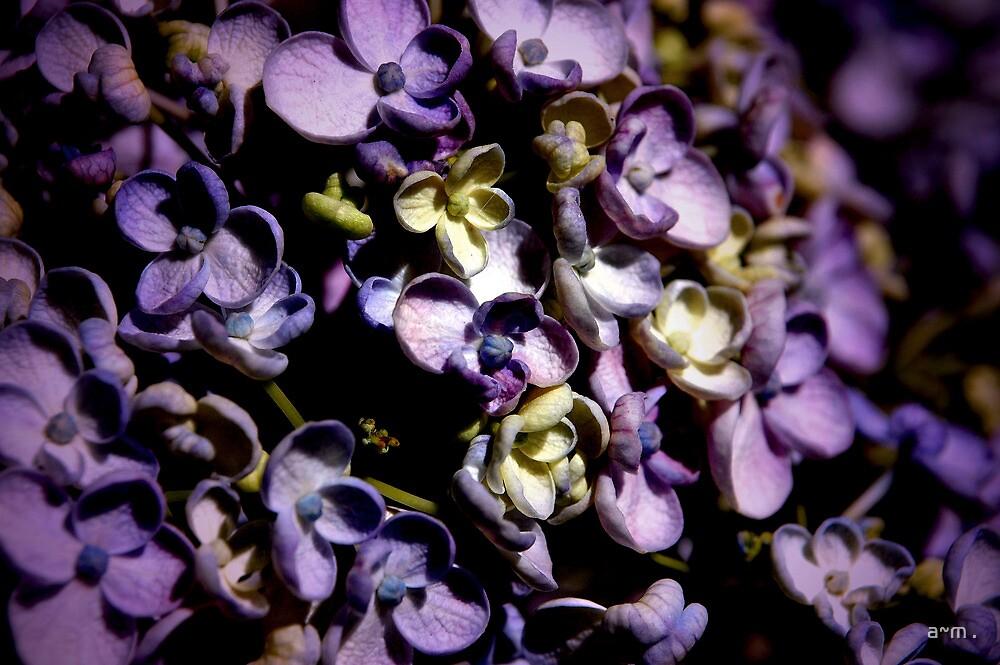 ~Lavender Hydrangea~ by a~m .