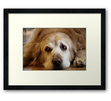 Oh Baxie ~ You Beautiful Beast! Framed Print