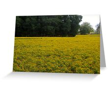 Field of bitter Dreams Greeting Card