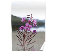 Pink stillness Poster