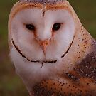 barn owl  by Brett Watson Stand By Me  Ethiopia