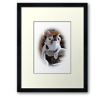 Just Hangin' out Framed Print