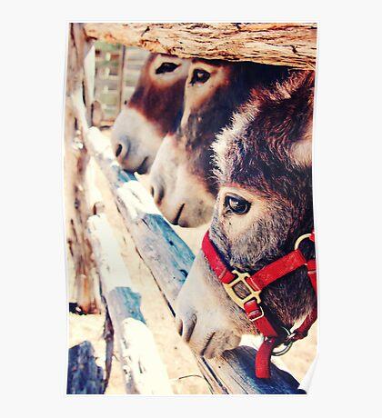 Donkey See Donkey Do Poster