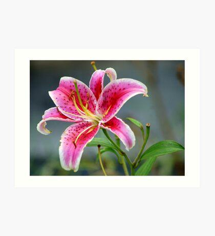 Star Gazer Lily Art Print