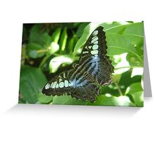 Butterfly- St. Louis Zoo, St. Louis, Missouri Greeting Card
