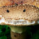 Angry Mushroom by SunDwn