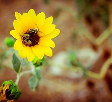 Busy Bees by SarahSandoval