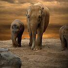 Wild Animals by Carol Bleasdale