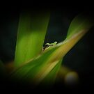 Peek A Boo In The Corn by Jonice