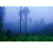 Foggy symphony in forest Photographic Print