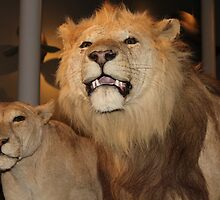 Lions by Gingersnaps1984