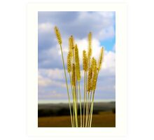Inflorescence cereal weeds Art Print