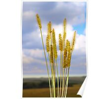 Inflorescence cereal weeds Poster