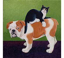 Bulldog and Cat Photographic Print